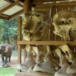 ปางหละ บ้านหลังสุดท้ายของช้างไทย