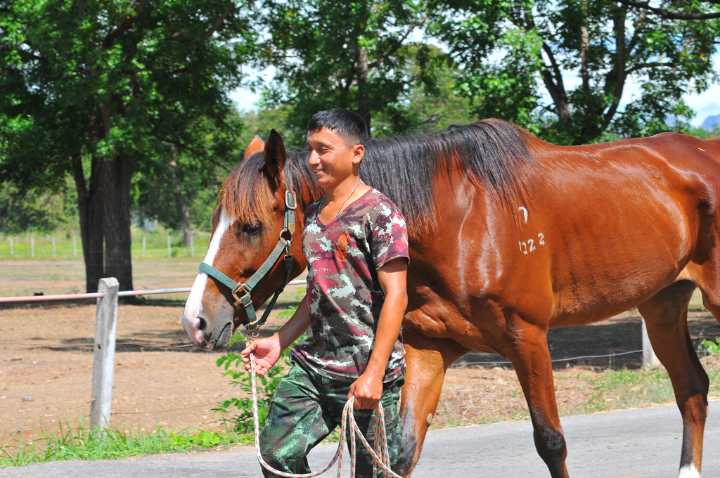 กองการสัตว์และเกษตรกรรมที่ 1 กรมการสัตว์ทหารบก