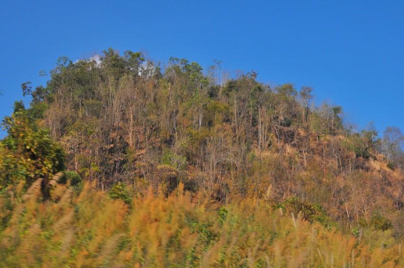 ป่าแล้งริมทาง