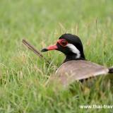 Bird170417-2