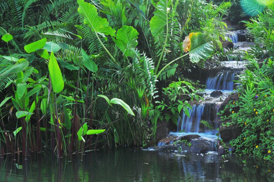 ความชุ่นชื้นในมุมน้ำตกกับกล้วยไม้หลากสีหลายพันธุ์