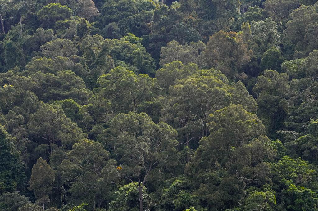 ผืนป่าพระแถวหนาแน่นด้วยพันธุ์ไม้อุดมสมบูรณ์