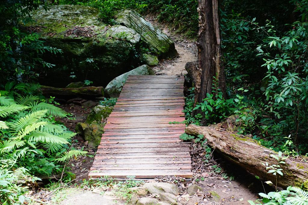 บางจุดต้องข้ามสะพานไม้  ภูกระดึงหน้าฝน (Phukradueng Wakeup Run)