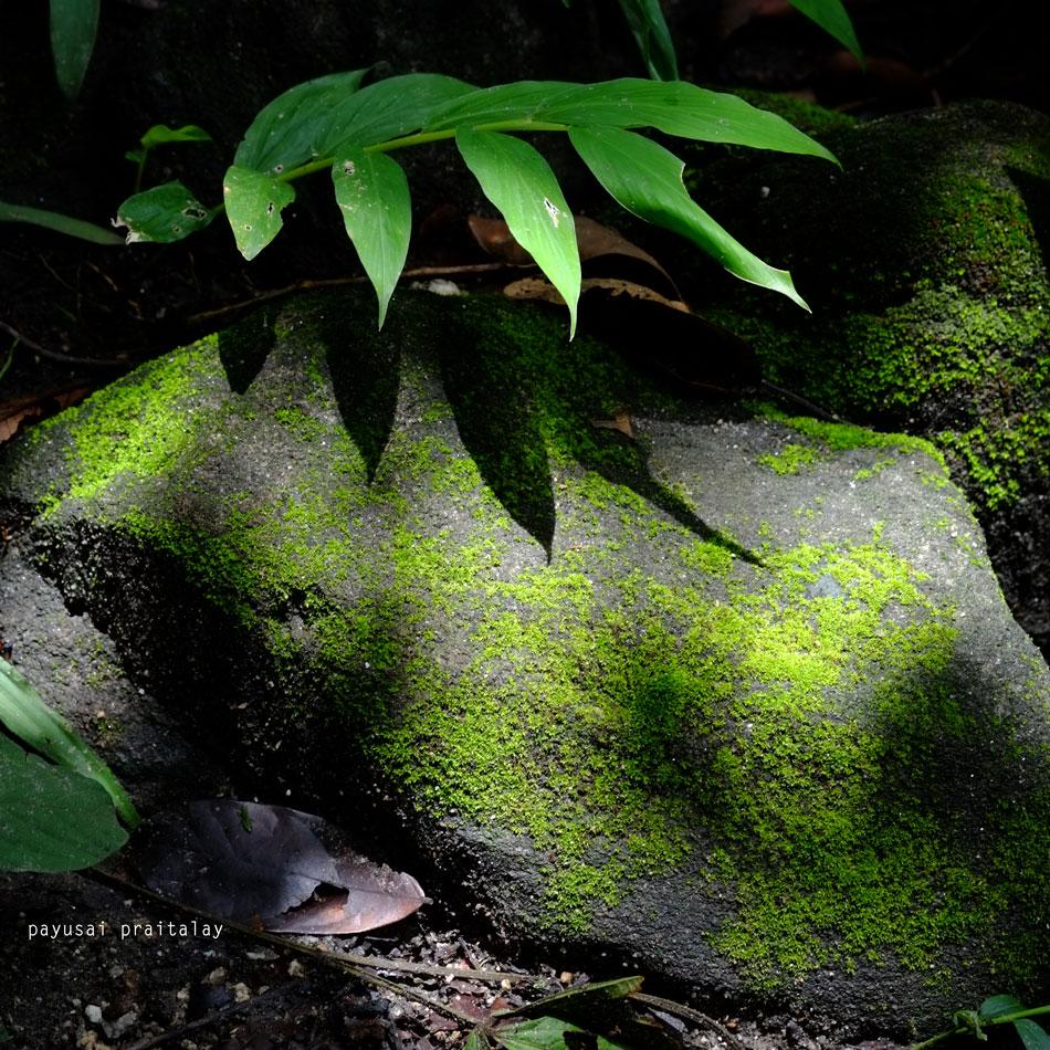 นอกจากเฟิร์น ระหว่างทางเดินจะพบมอสตะไคร่เจริญเติบโตอยู่บนก้อนหิน แสดงให้เห็นความสัมพันธุ์ที่เอื้อกันและกัน พึ่งพาอาศัย