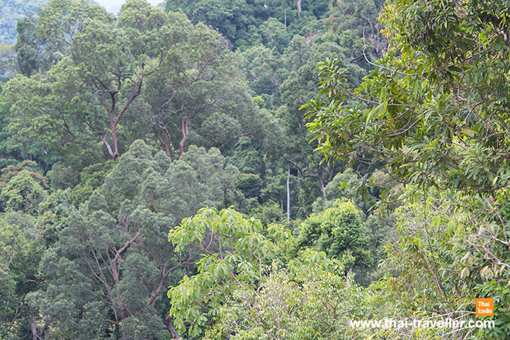 ป่าครึ้มเขียว | น้ำตกโตนงาช้าง