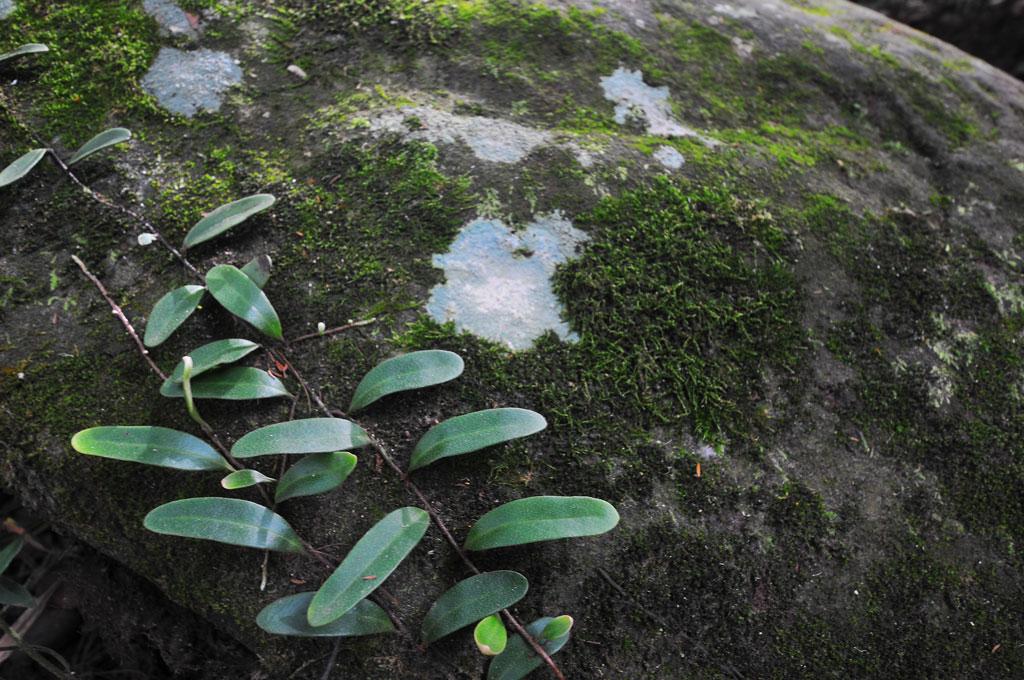 มอสบนแผ่นหินและไม่เลื้อยบางชนิดแสดงให้เห็นความชุ่มชื้นบริเวณรอบๆ น้ำตก | น้ำตกปลาบ่า ลำธาราแห่งสายน้ำสาน