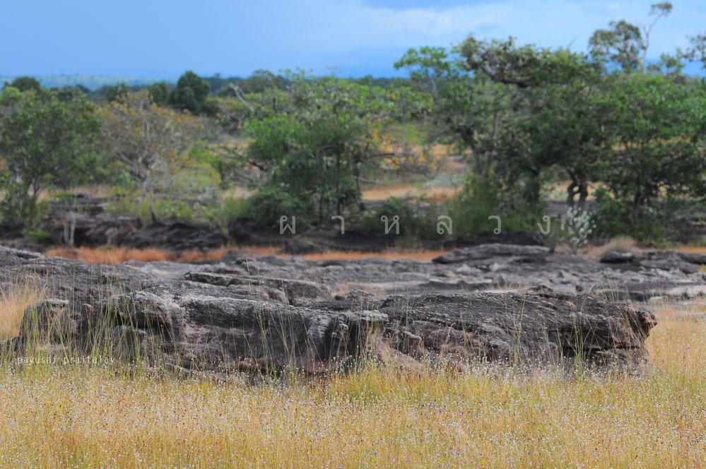 ทัศนียภาพลานหินบนวนอุทยานน้ำตกผาหลวง