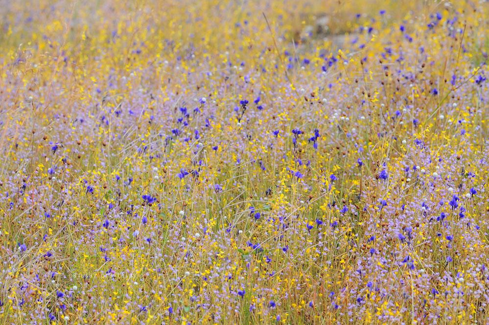 วนอุทยานน้ำตกผาหลวงถือว่าเป็นลานที่มีดอกไม้ให้ชมมาก มากพอๆ กับที่น้ำตกสร้อยสวรรค์