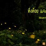 ทุ่งแสง  หิ่งห้อย ปราจีนบุรี